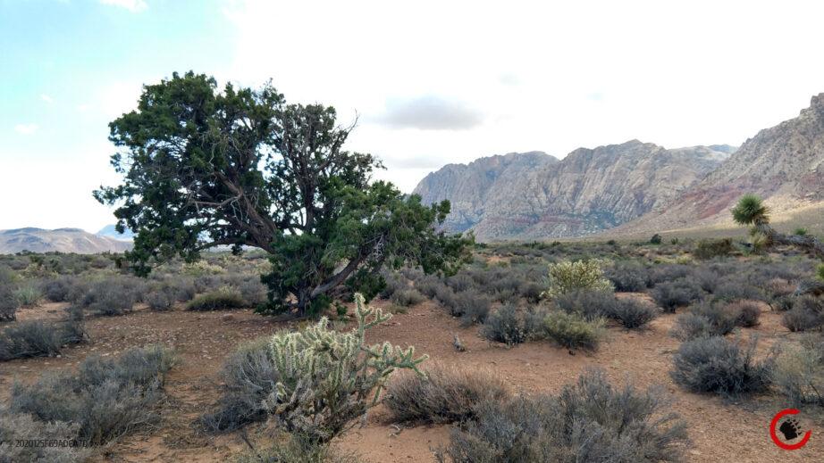Mojave Landscape #1