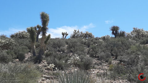 Mojave Landscape #2