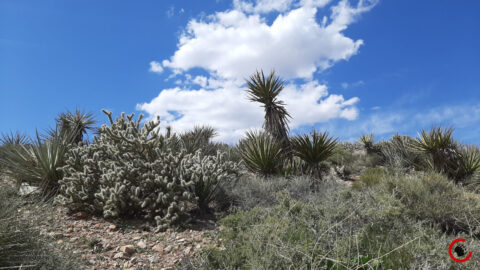 Mojave Landscape #3